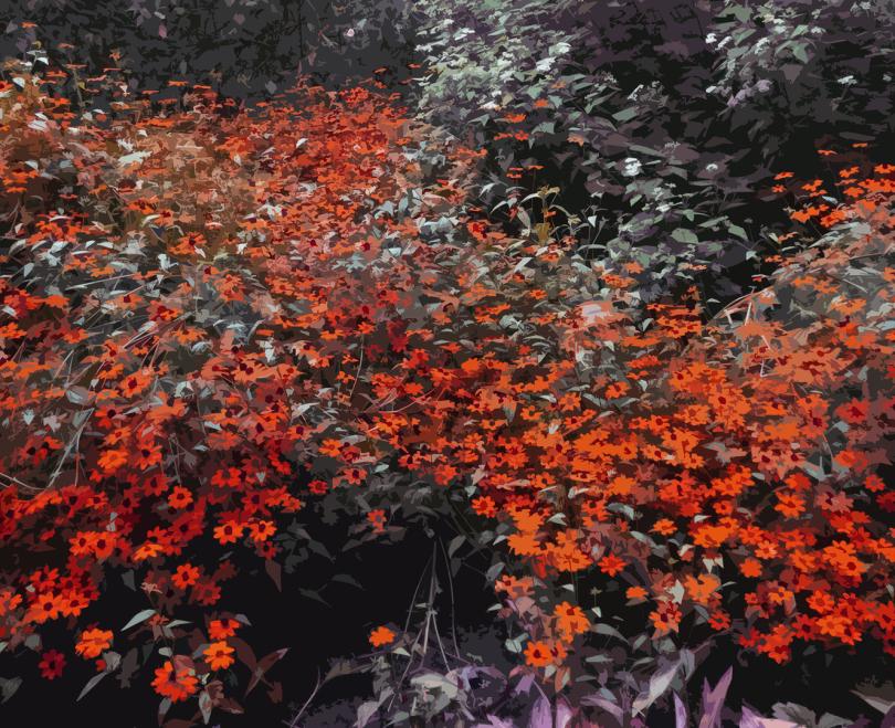 CG|Corine Grzésik | Fotokunst, Naturfotos, Indian Summer, Herbstlicht, Wald, Rote Blüten, Friedenau