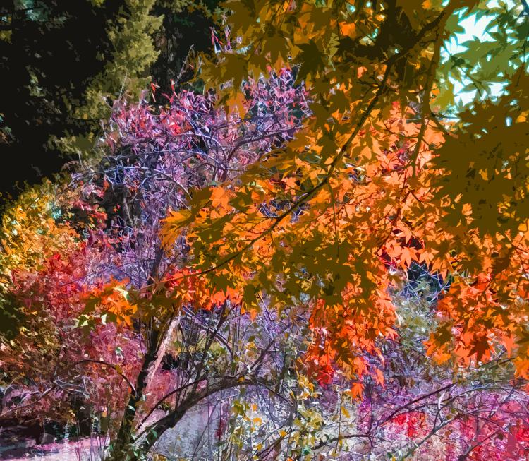 CG|Corine Grzésik | Fotokunst, Naturfotos, Indien, Herbstlicht, Wald, Friedenau