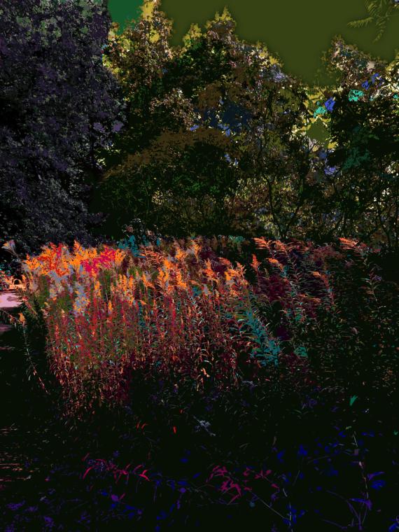 cg | Corine Grzésik | Fotokunst Berlin, Natur, Jahreszeiten, Nachtlicht, Spaziergang, Miscanthus