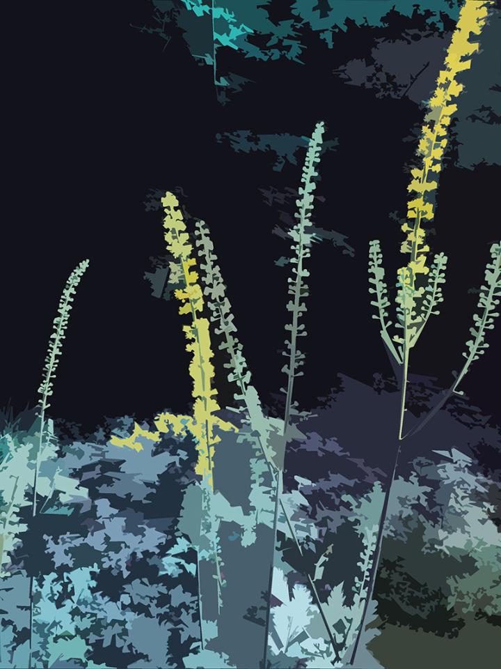 CG|Corine Grzésik | Fotokunst, Naturfotos, Bunte Blüten, Friedenau