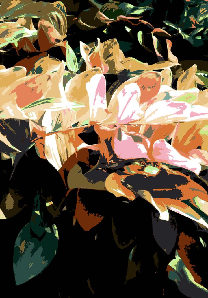 CG|Corine Grzésik | Fotokunst, Naturfotos, Foliage Orange, Herbst, Friedenau