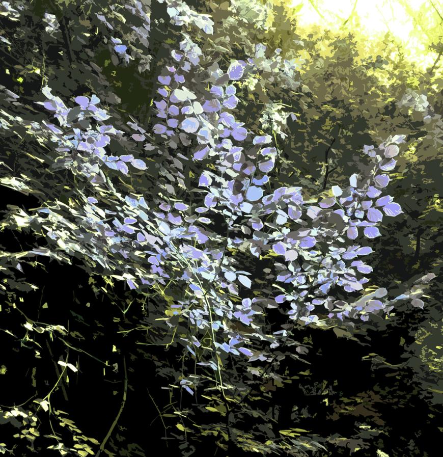 CG|Corine Grzésik | Fotokunst, Naturfotos, Lavendel, Wald, Friedenau