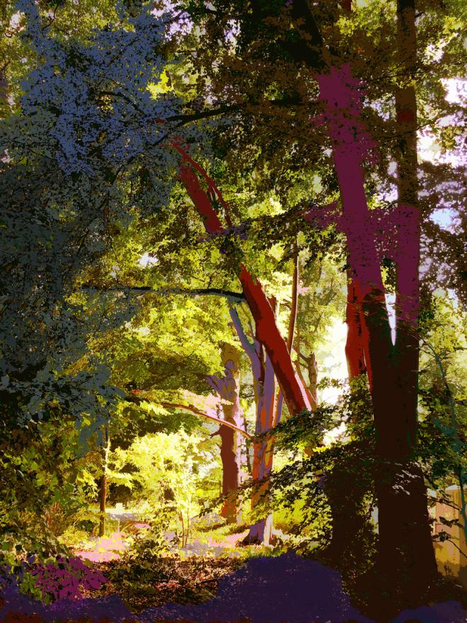 CG | Corine Grzésik | Fotokunst Berlin, Natur, Jahreszeiten, Bäume, Trees, Spaziergang, Glow, Glühen
