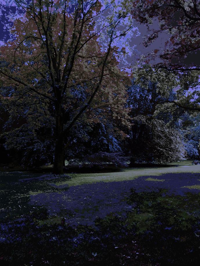CG | Corine Grzésik | Fotokunst Berlin, Night, Nacht, Natur, Jahreszeiten, Bäume, Trees, Digital Art, Print Art, Friedenau